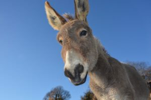 donkey intelligence test helps breeders select the traits most in demand