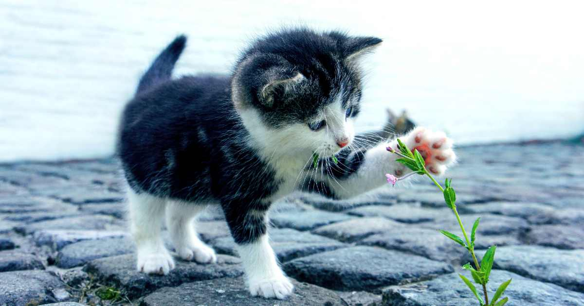 How can you stop your cat from hunting wildlife - kitten playing with plant