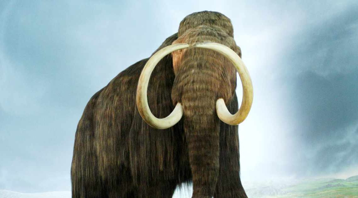 overhunting - an extinct mammoth
