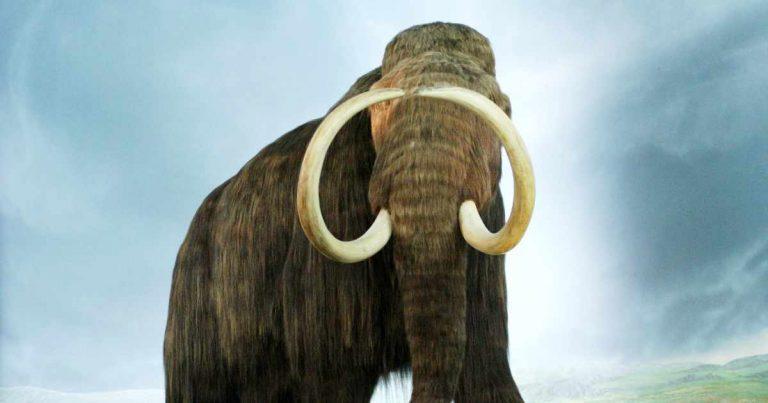 overhunting - an extinct mammoth