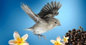 shade-grown coffee - bird flies near coffee beans
