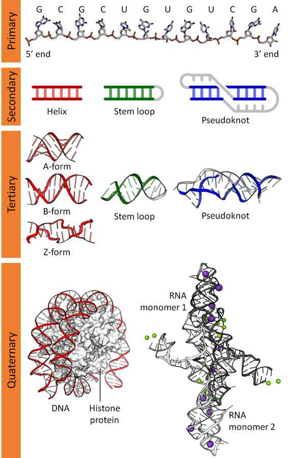 Diagrams of DNA - 3