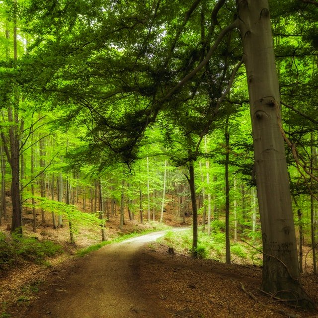 bible passages about optimism - trees in forest - Photo by Lukasz Szmigiel on Unsplash