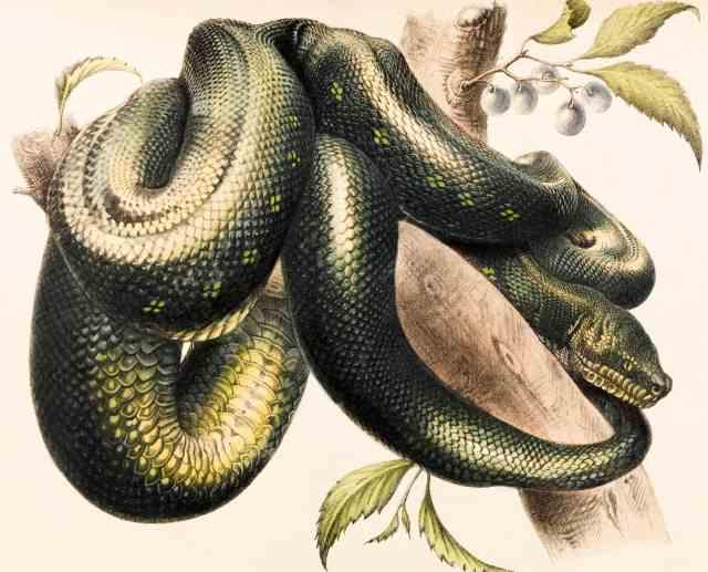 biblical meaning of snakes - garden of eden