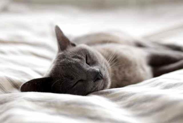 sleep mantras - sleepy cat on pillow