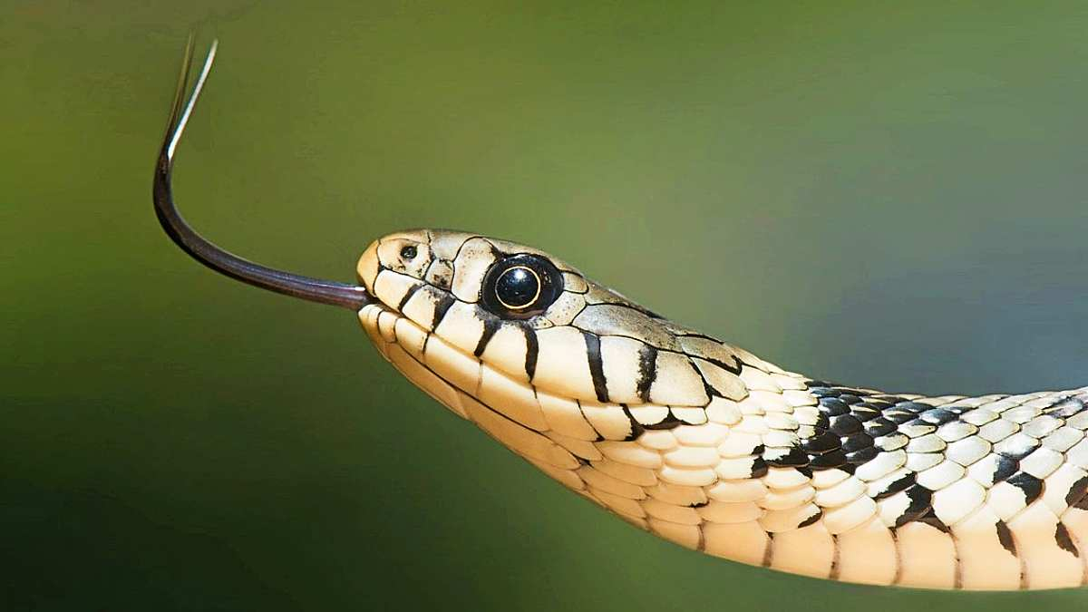 What-does-it-mean-to-have-dreams-about-snakes - snake on green background