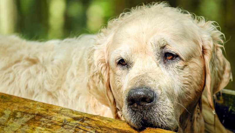 condolence messages for loss of a pet